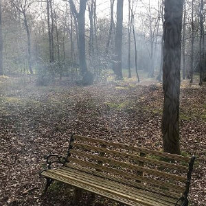 Campfire with Bench