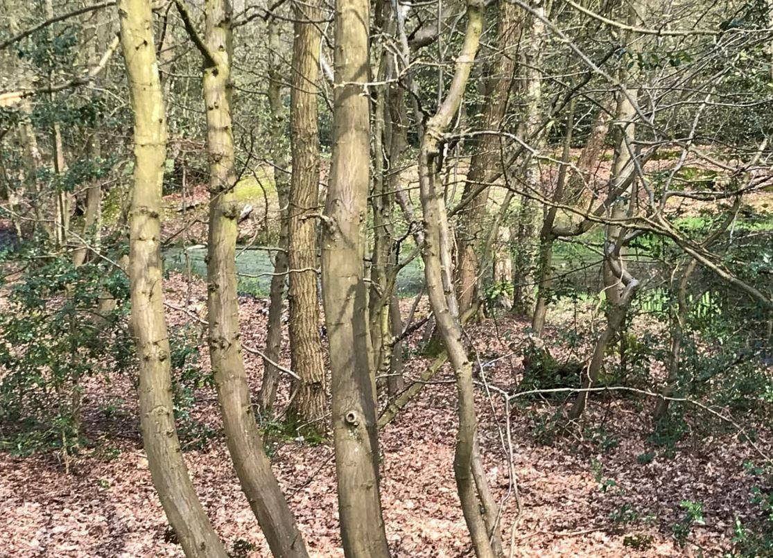 Woodland at Danemead